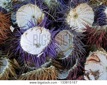 sea urchins during the day near the sea