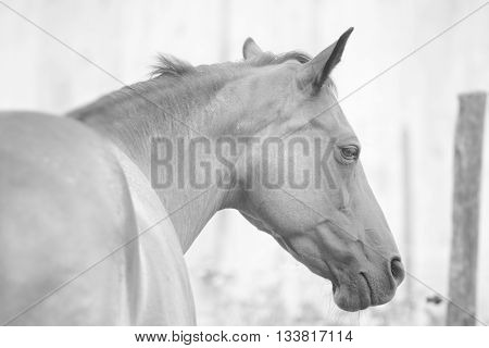 Side shot of a beautiful young pure-blooded horse