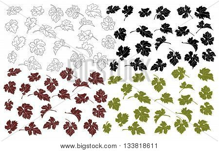 Set the grape leaves. Isolated leaves of grapes on a white background