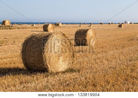 Rural landscape: hay rolls close up on wheat field - near the sea coast of Larnaca Cyprus.