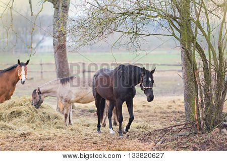 three beautiful horses on the pasture, springtime