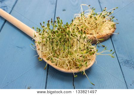 Fresh Alfalfa Sprouts On A Blue Board