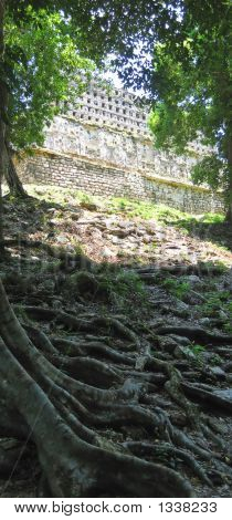 The Big Acropolis Emerging From The Jungle  Yaxchilan  Mexico  Panorama