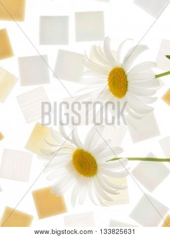 beautiful satin square glass light pearl mosaic and sand with blurred stripes scattered isolated on a white background and chamomile similar in color to the mosaic