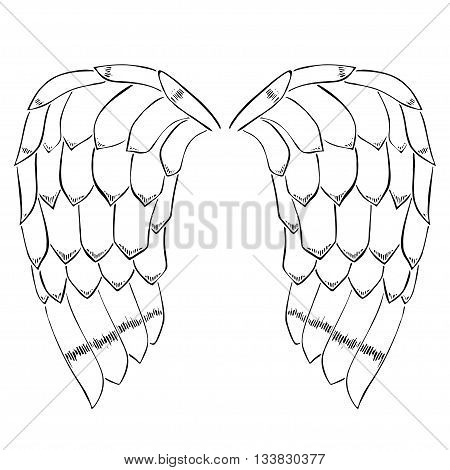 Original illustration of vintage woodcut style eagle bird or angel wings
