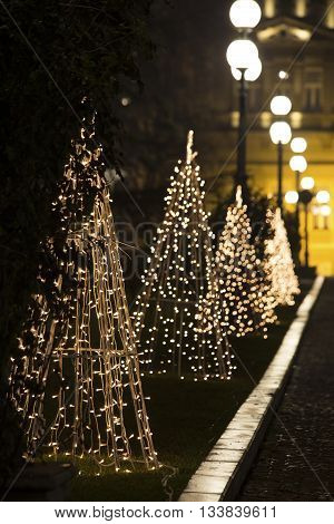 Row of the Christmas trees in the night