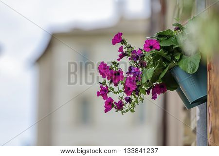 Flower With Blurred Houses
