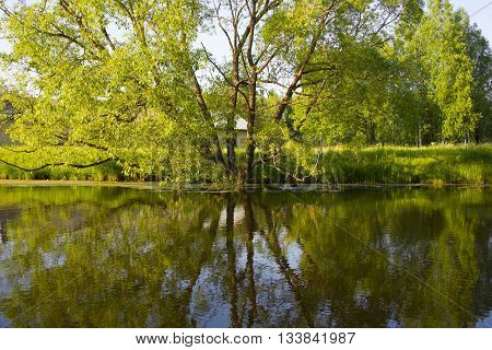Mirroring of a large tree in the water of the lake. A beautiful peaceful rural landscape. Big tree by the lake.