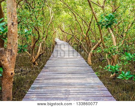 stairway leading to the tropical mangrove in the sea shore the rich of ecosystem forms on this type of swamp forest