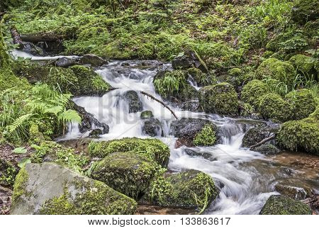 Creek In The Forest Flows Over Stones Covered With Moss