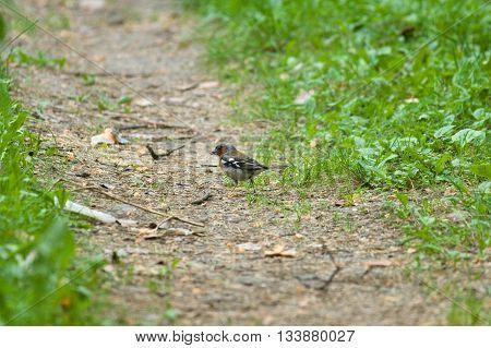 Small Bird On The Ground