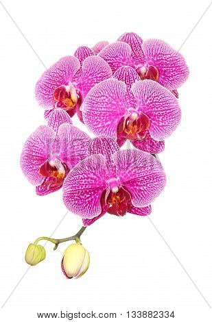 Vibrant pink orchids for background use merit.