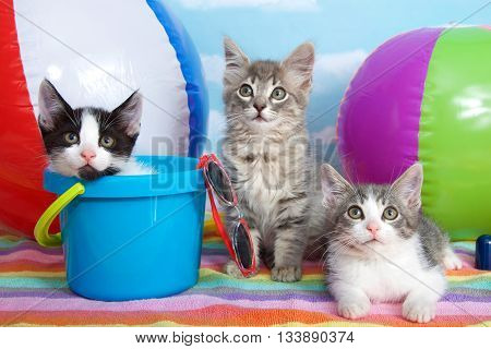 three tabby kittens on colorful striped beach towel, beach balls, bucket, sun glasses. Summer fun time
