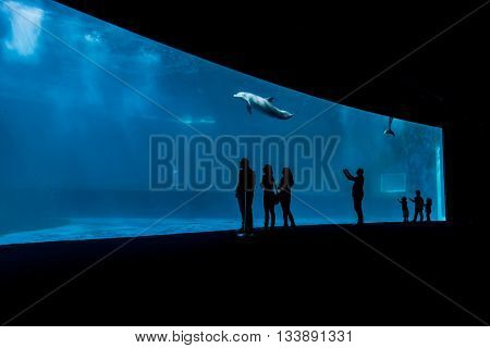 GENOA, ITALY - JUNE 2, 2015: Unidentified people at Genoa aquarium. The Aquarium of Genoa is the largest aquarium in Italy and among the largest in Europe.