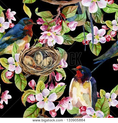 Apple blossom and swallows. Watercolor bird on spring branch with nest and blooming flowers. Hand painted illustration on black background