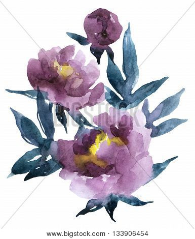 Peony collection. Peonies isolated on white background. Hand painted watercolor peonies illustration