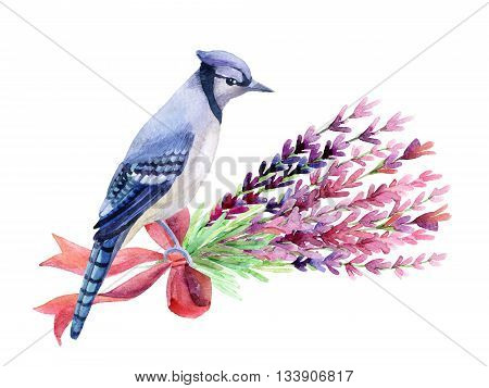 Blue jay with lavender isolated on a white background. Hand painted watercolor illustration.