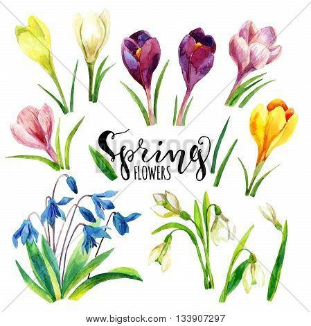 Watercolor spring flowers set. Hand painted snowdrop crocus flowers isolated on white background