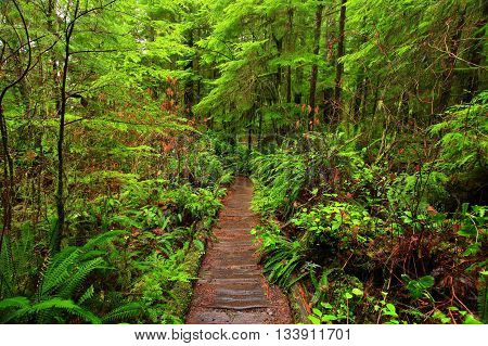 a picture of an exterior Pacific Northwest rainforest trail