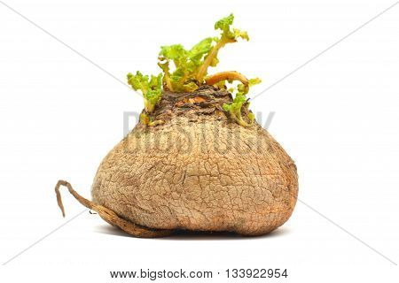 natural turnip - bio food isolated on white