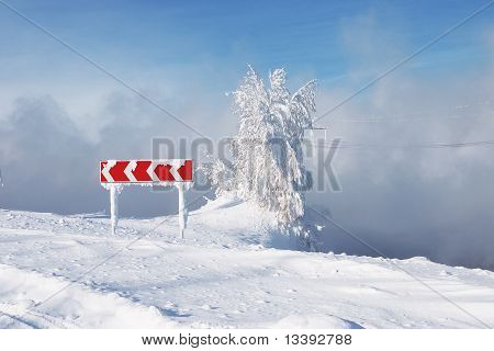 road sign and tree