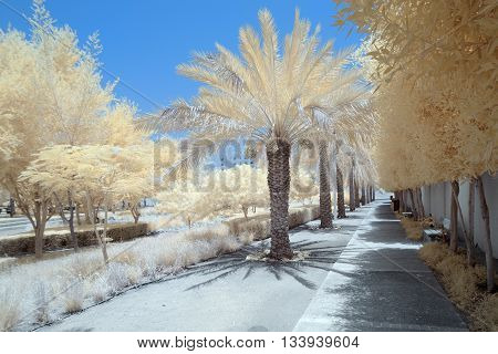 Infrared Image Of Trees And Shrubs In False Color