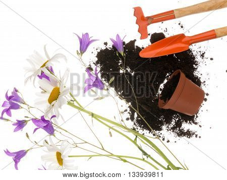 Garden still life with a shovel a pitchfork a plastic with brown goroshokom of scattered black fertile soil and flowers field of daisies and purple bell and thin stems on a white background isolated