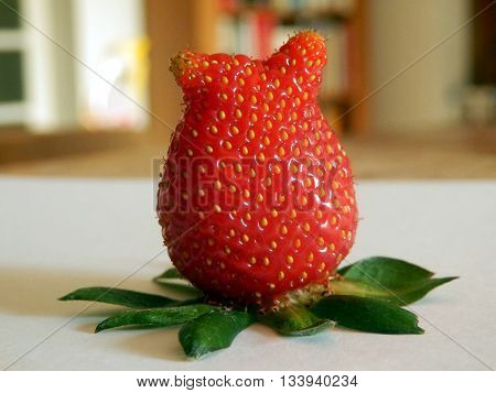 Misshapen strawberry looking like it has a pair of ears