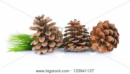 Pine cones isolated on a white background