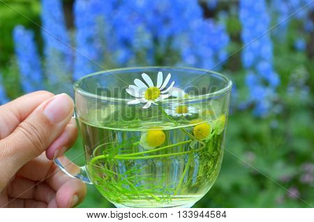 Tea with a camomile on a background blossoming on a bed of blue delphinium, daisies therapeutic agents - traditional medicine