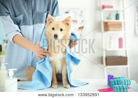 Cute dog at groomer salon