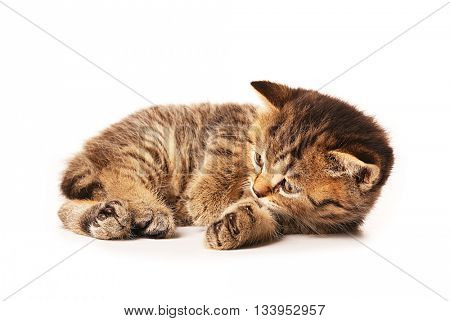 Small cute kitten, isolated on white