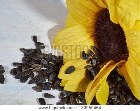 sunflower sunflower seeds and a bottle of sunflower oil