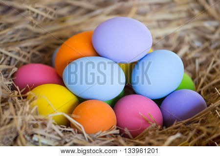 group of colorful easter egg on nest