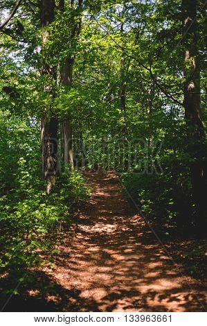 Forest path in sunny day witch many green colors