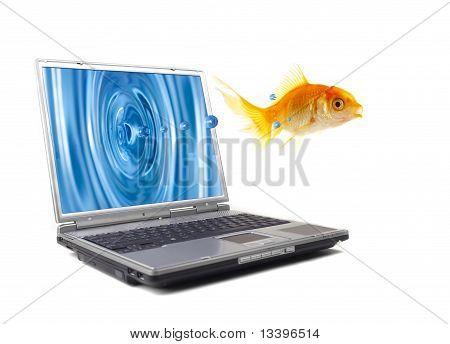 Fish Jumps
