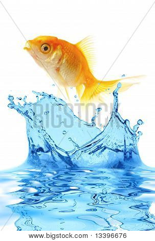 The Gold Small Fish