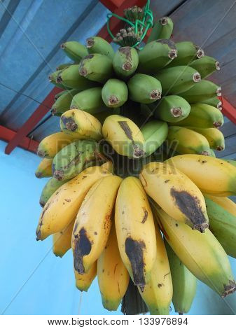 bananas americanas venezolanas cultura comida gastronomia dulce fruta