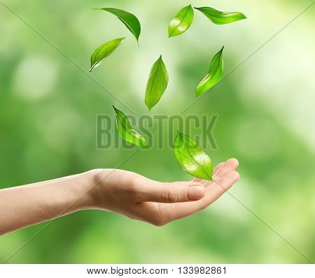 Green leaves falling into woman hand, on green nature background