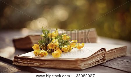 The old open book and yellow buttercups on a wooden table.