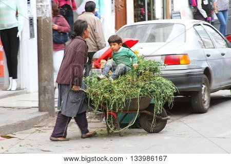 Cajamarca Peru - June 11 2016: Andean woman sells alfalfa and grasses from wheelbarrow in Cajamarca Peru on June 11 2016