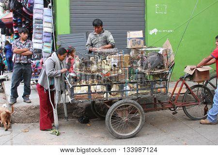 Cajamarca Peru - June 11 2016: Peruvian man sells poultry from bicycle cart in Cajamarca Peru on June 11 2016