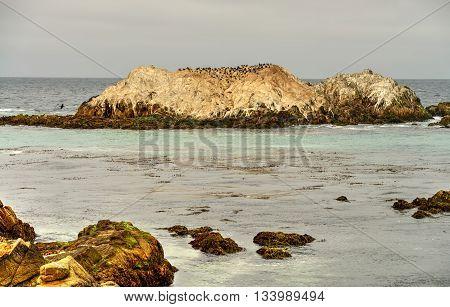 Early mporing Asilomar State Marine Reserve California