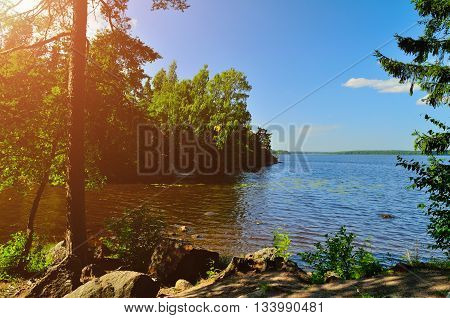 Summer landscape view of pine tree at the coast of the Protective Bay on the Gulf of Finland Russia. Summer sunny landscape panoramic view.