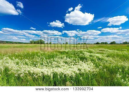 green field and blue sky at summer