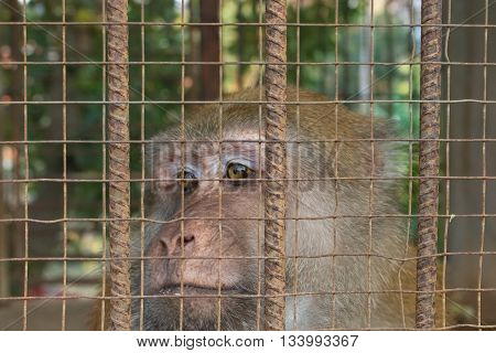 The monkey was kept in a large cage