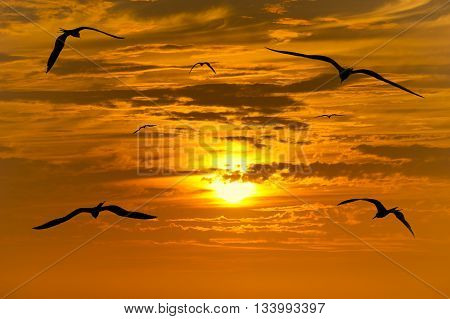Birds migration silhouettes is a group of birds flying silhouetted with a beautiful glowing orange and yellow sunset beaming in the background