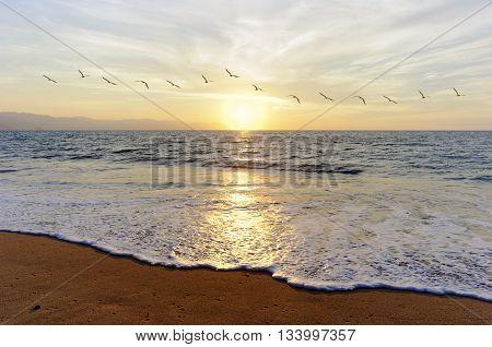 Ocean sunset birds a flock of birds flying toward the bright peaceful sun on the ocean horizon.