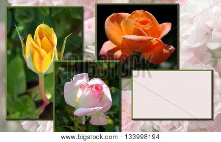 Collage of different kinds of roses, with copy space