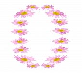 Pink Daisies Egg Shaped Border